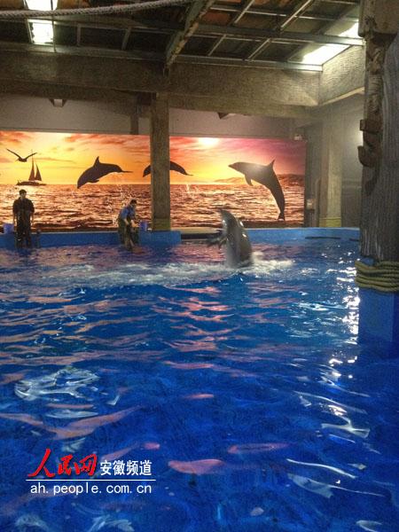 合肥汉海极地海洋世界引入的有来自日本的鲸鱼,企鹅等,阿根廷水豚