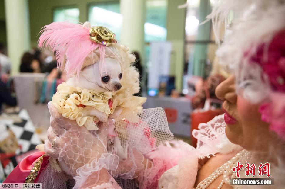 狗狗时装秀纽约上演 公主国王华丽登场