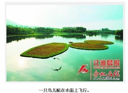 蜀峰湾公园北湖湖面上的3个生态浮岛面积大约有600㎡,其中有2个是圆形