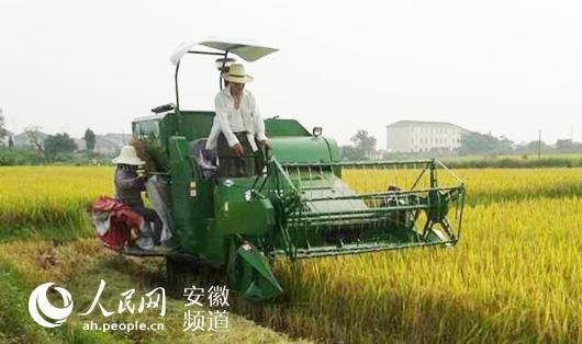 人民网讯 针对南方特殊区域的水稻田作业,奇瑞重工近年来推出的PL20水稻机,一上市便深受用户欢迎,适应性强损失率低,成为小地块水田作业的收割利器。 据了解,谷王PL20型履带式全喂入水稻联合收割机是奇瑞重工专门针对丘陵、山区等小地块特定需求设计、开发的首款纵轴流产品,集收割、脱粒、分离、清选为一体的作业,相对于分别收获而言,其机械化水平较高,能显著提高劳动生产率,降低劳动强度。在产品功能、适用性、可靠性等方面都领先于其他产品,弥补了国内丘陵、山地区域纵轴流产品的空白。  谷王PL20水稻收割机荣获中国农