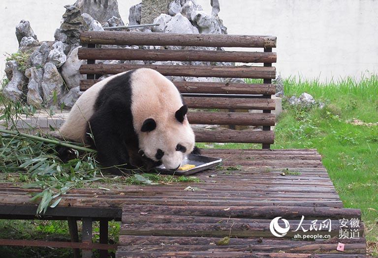 """小动物们咋过中秋:过节也有美味""""月饼""""吃【2】"""