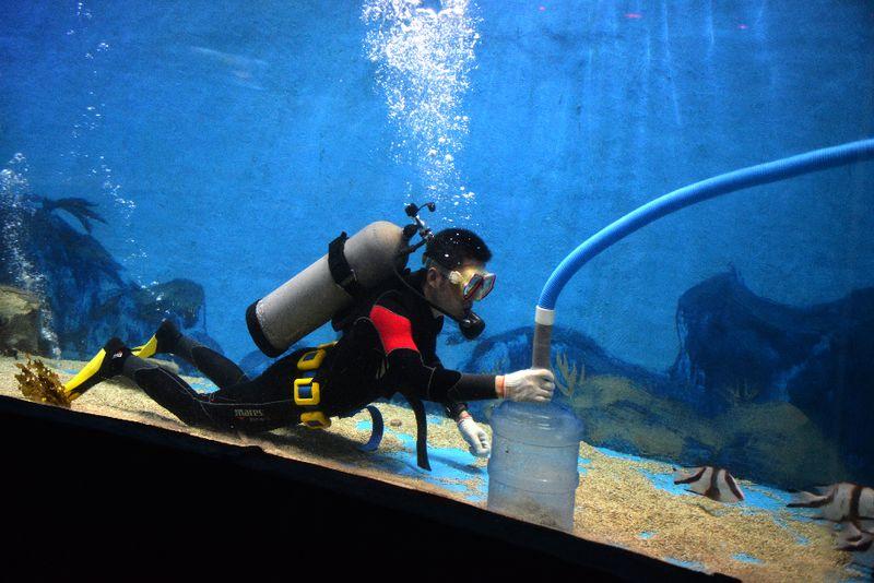 9月25日,记者从合肥海洋世界水族馆了解到,今年十一黄金周期间合肥海洋世界将举行海豚阅兵活动。据了解,在海豚阅兵活动中海豚将给观众们带来诸多特技动作,直立走、前空翻空中转体2周半、空中顶球等。另外,合肥海洋世界为了迎接国庆到来,引进了大批精品海洋鱼类。记者张峭春 摄