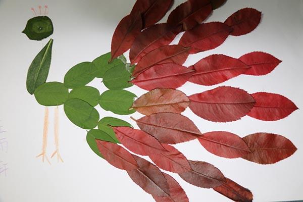 合肥市莲花小学三(3)班孩子们将收集到的各种形状,大小,颜色不同的
