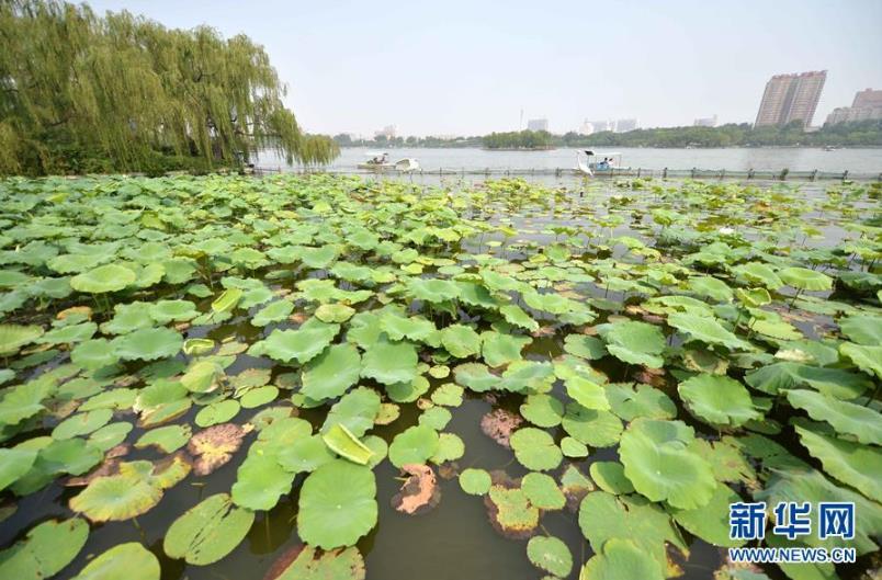 游人在济南大明湖游玩(7月2日摄)。 12月19日,济南市政府召开新闻发布会宣布,除执行政府定价的展馆(室)和经营性项目外,大明湖景区老区将于2017年1月1日起正式免费对外开放。新华社记者 朱峥 摄