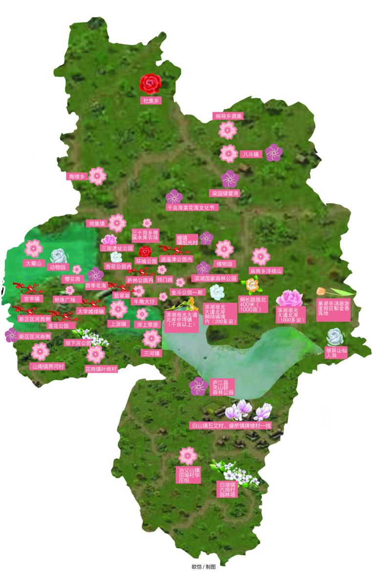 其中,最受瞩目的当属合肥植物园的梅花节,玉兰游园会,郁金香展,荷花