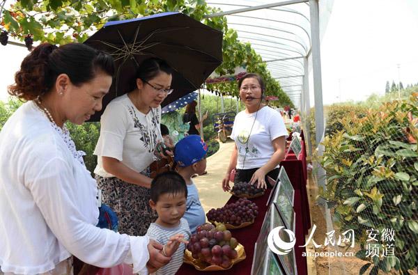 安徽庐江:农民葡萄获金奖
