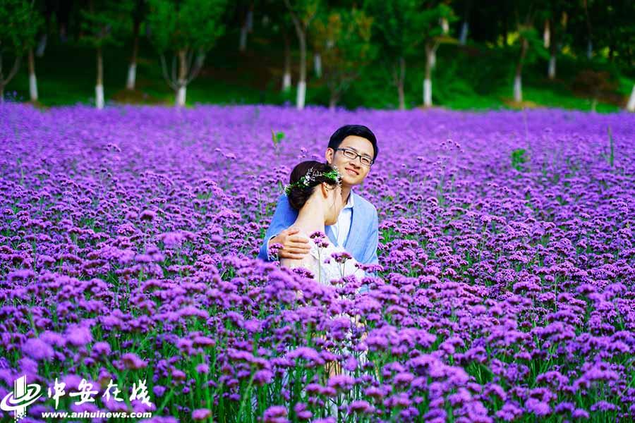 合肥现紫色花海