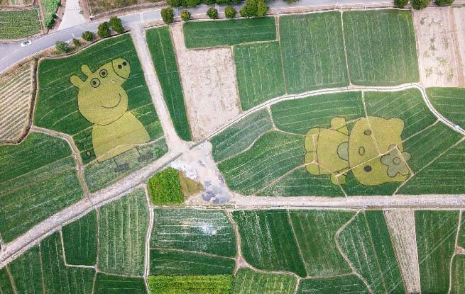 航拍:稻田动漫创意巧 绘就田园新面貌