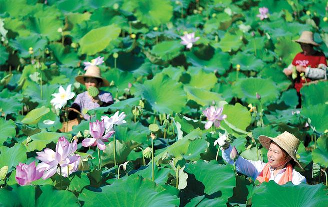 生态农业助力乡村振兴 带动农民创业、就业、增收