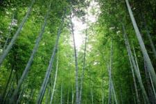 木坑竹海景区
