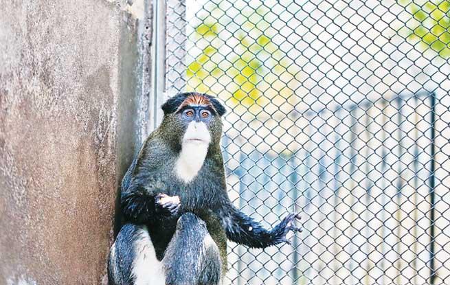 """合肥野生动物园来了两只很有学问的""""博士猴"""""""