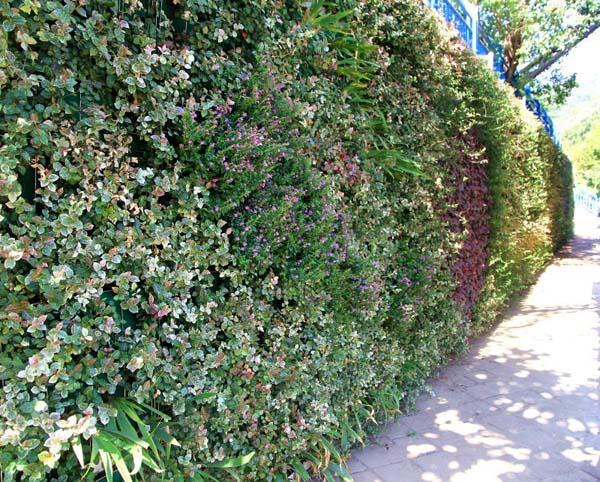 合肥高新区试点模块式墙体垂直绿化 拓展城市生态空间