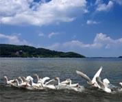 池州升金湖