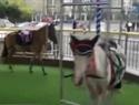 电动驱使马转圈