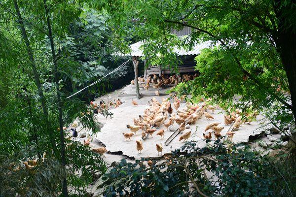 古坊:循环生态养殖带农增收致富