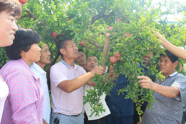 农民教育培训促进农民增收