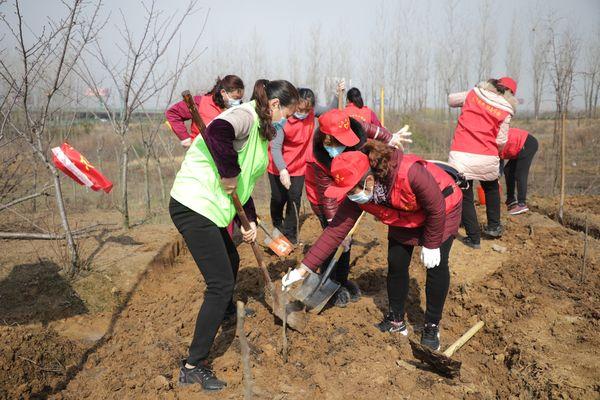 長豐縣崗集鎮:植樹節 志愿服務植綠助企