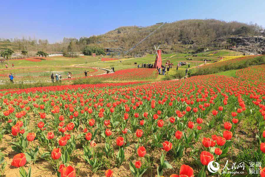 黟县:春暖花开竞枝头 石林已成花世界